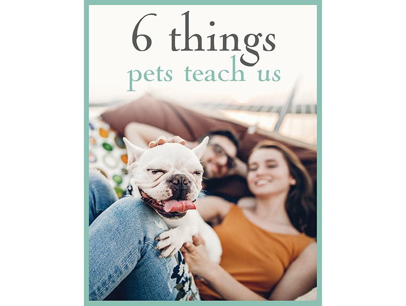 6 Things Pets Teach Us download