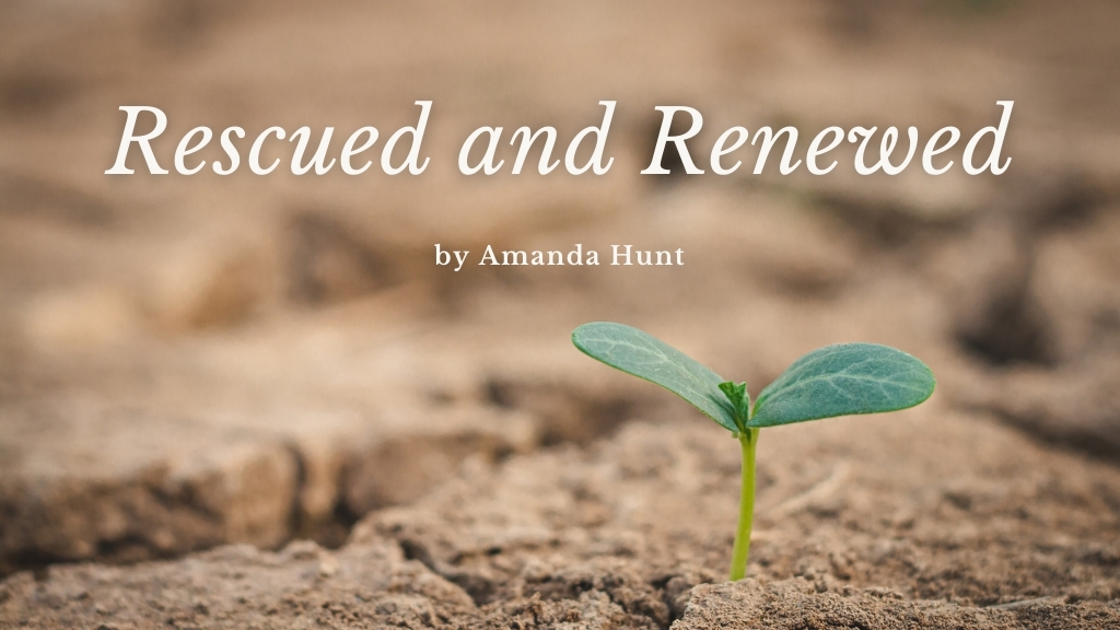Blog Rescued and Renewed cover photo by Amanda Hunt